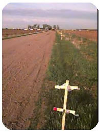 Crosses Along the Trail