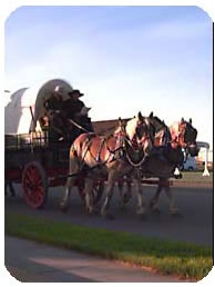 A Pair of Matched Draft Horses